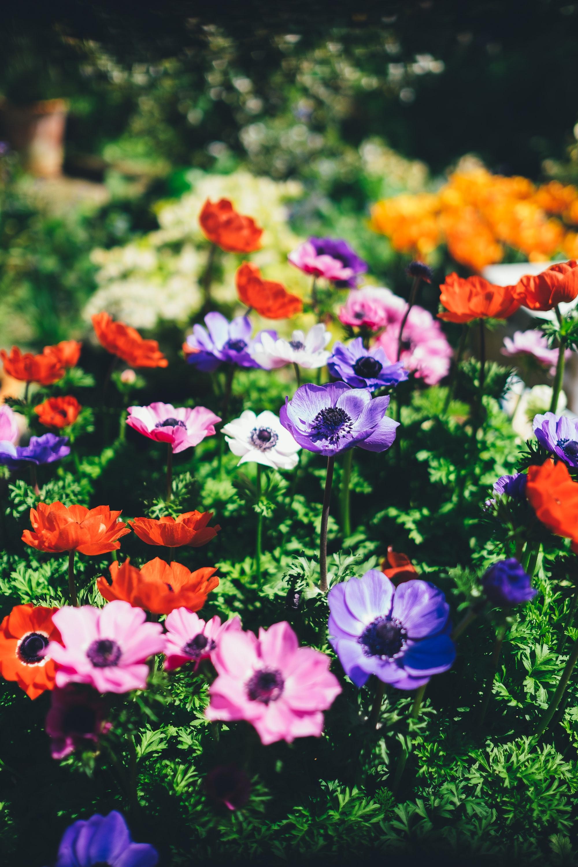 botanical-spring-daytime