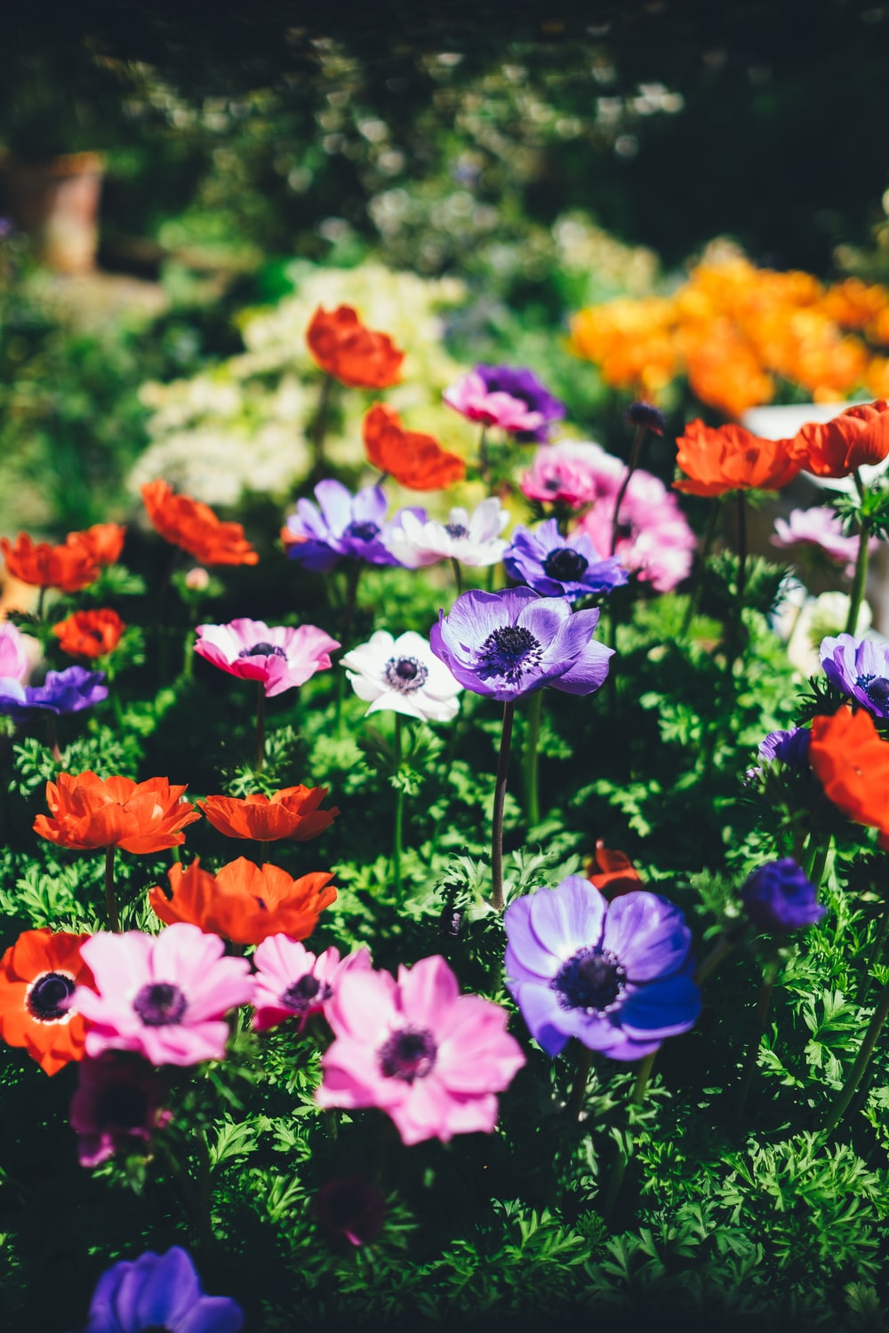 assorted flowers in shallow focus lens