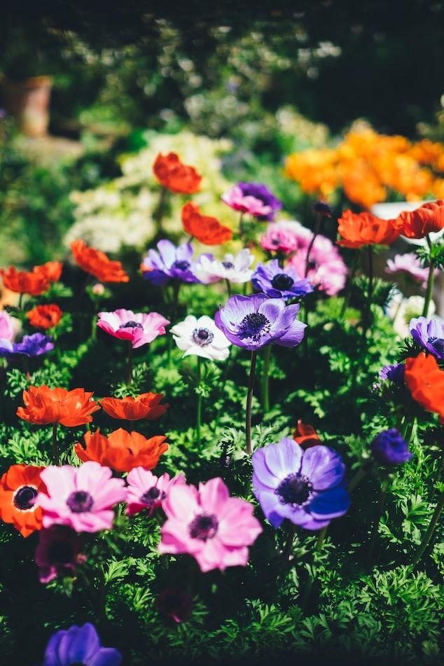 Grow Or Prepare A Flower Garden | Rewarding Fall Season Garden Ideas For Every Smart Green Thumb