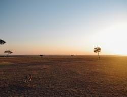 Serengeti Pirschfahrt – Ngorongoro-Krater