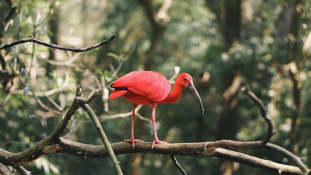 red bird on tree brance