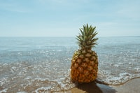 pineapple fruit on seashore