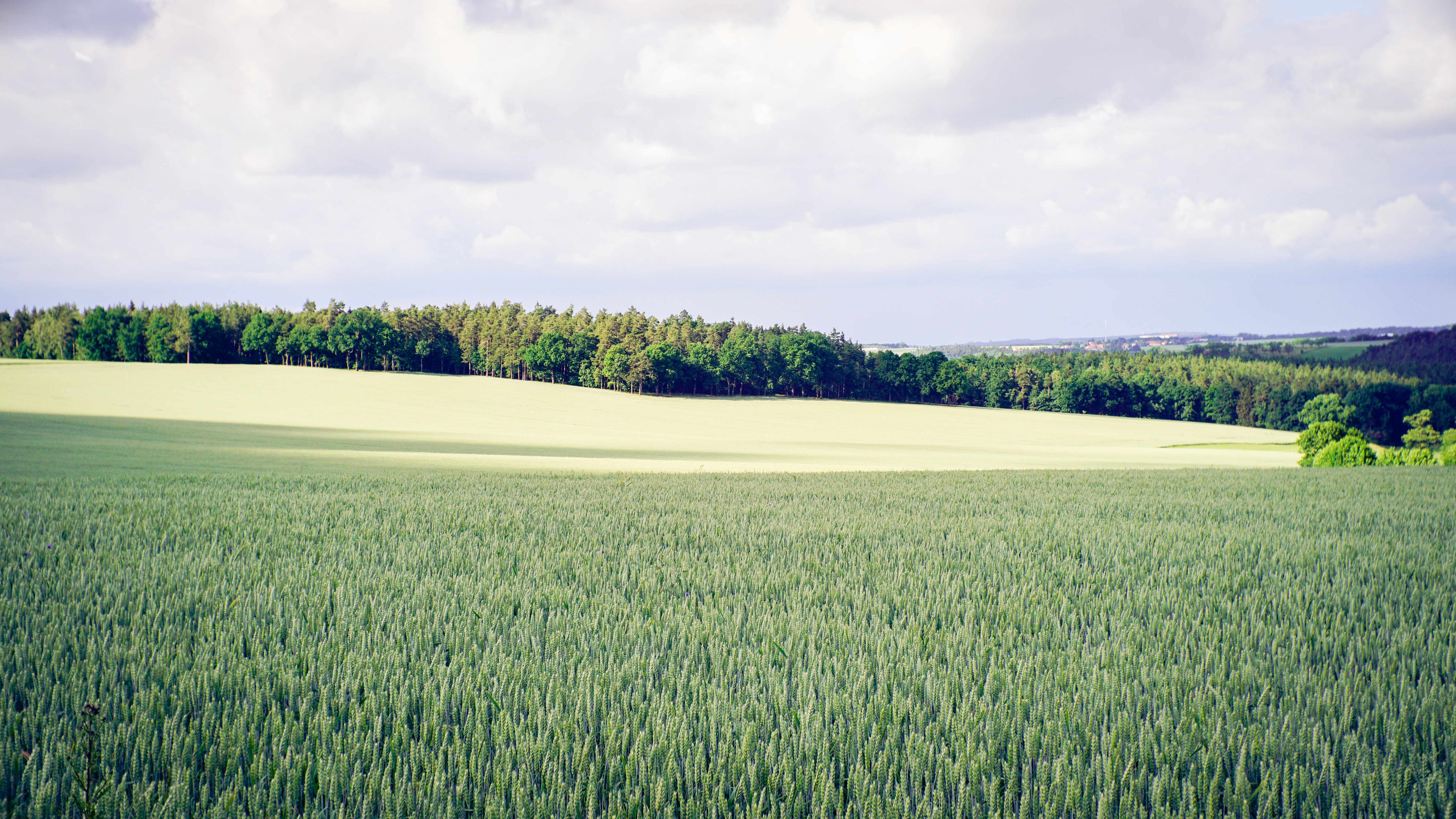 A vast green agricultural field in Thuringia
