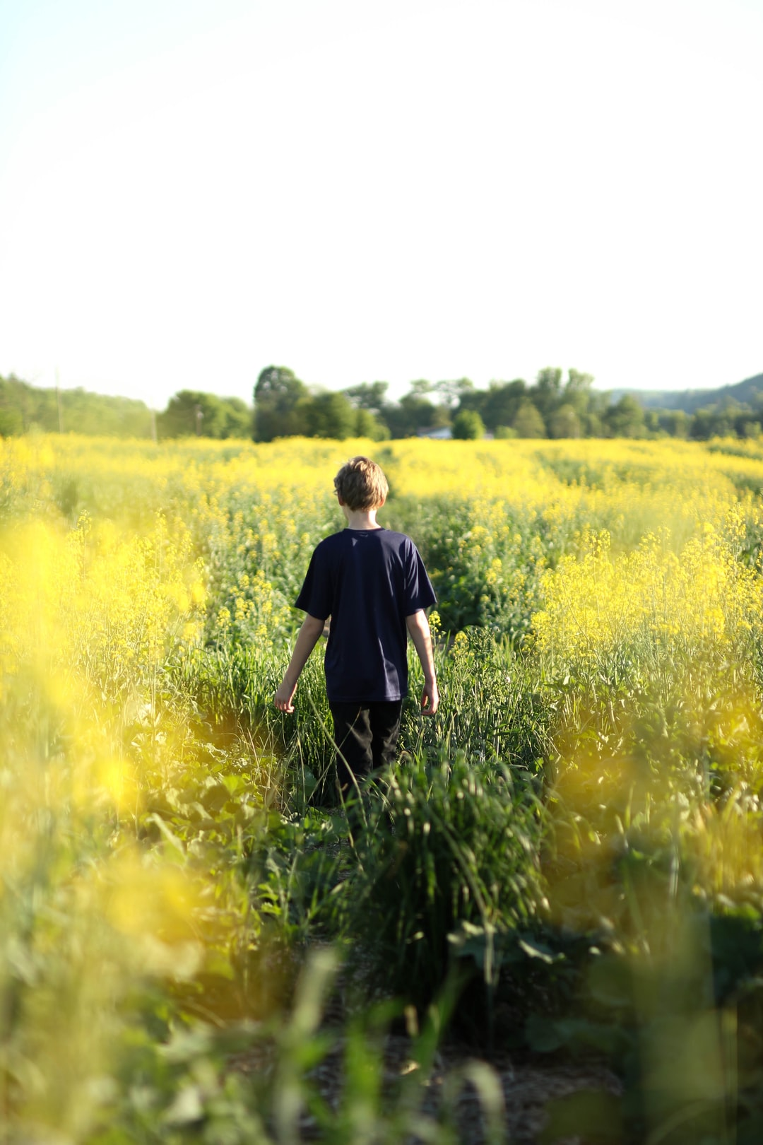 A boy standing in a field of yellow flowers.