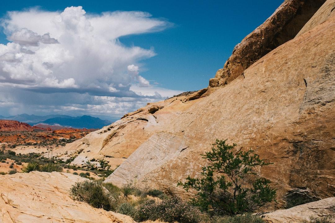 Desert Shrubs and Mountains