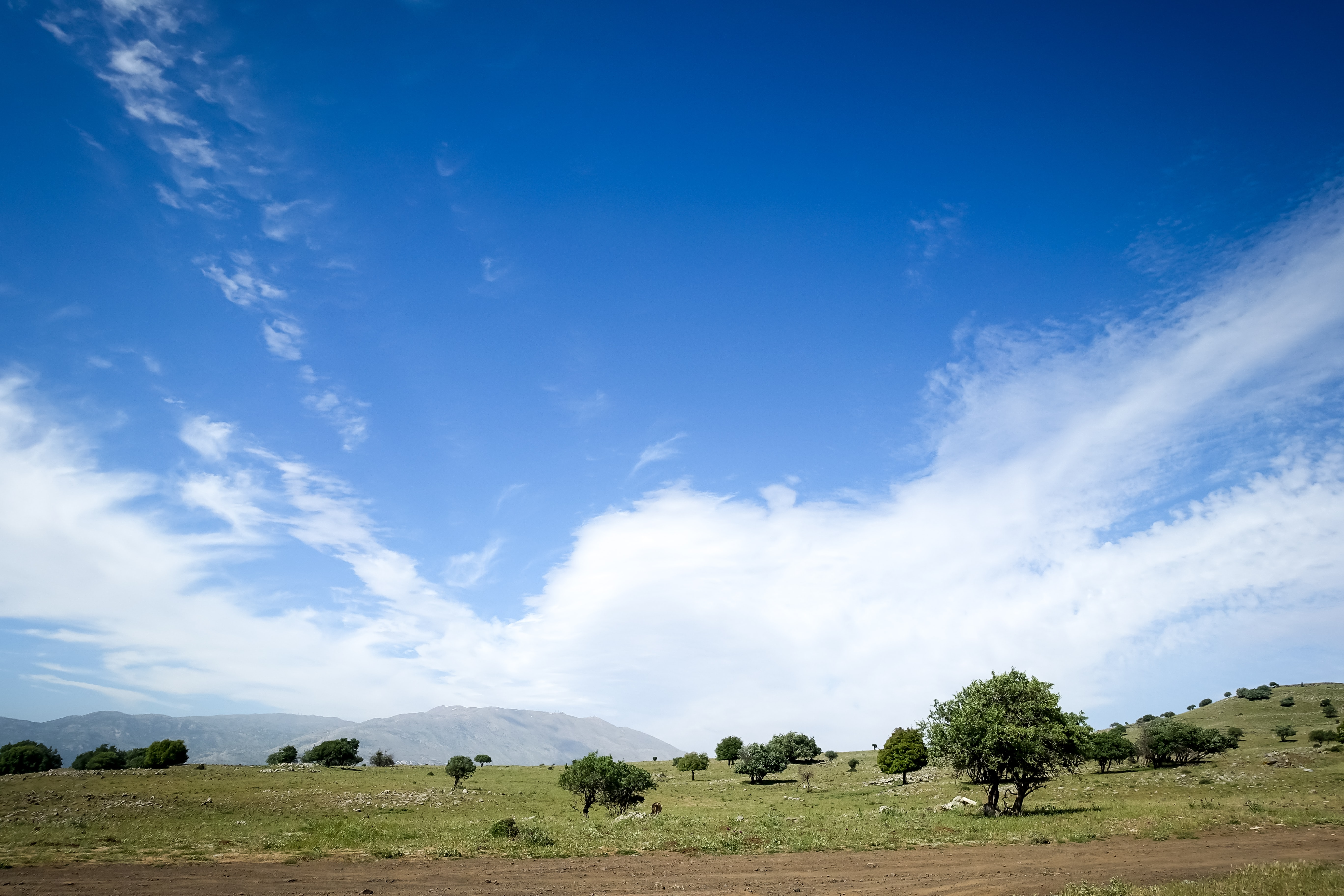 green trees near mountain under blue sky at daytime