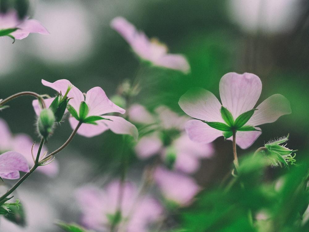 macro photography of purple flowers