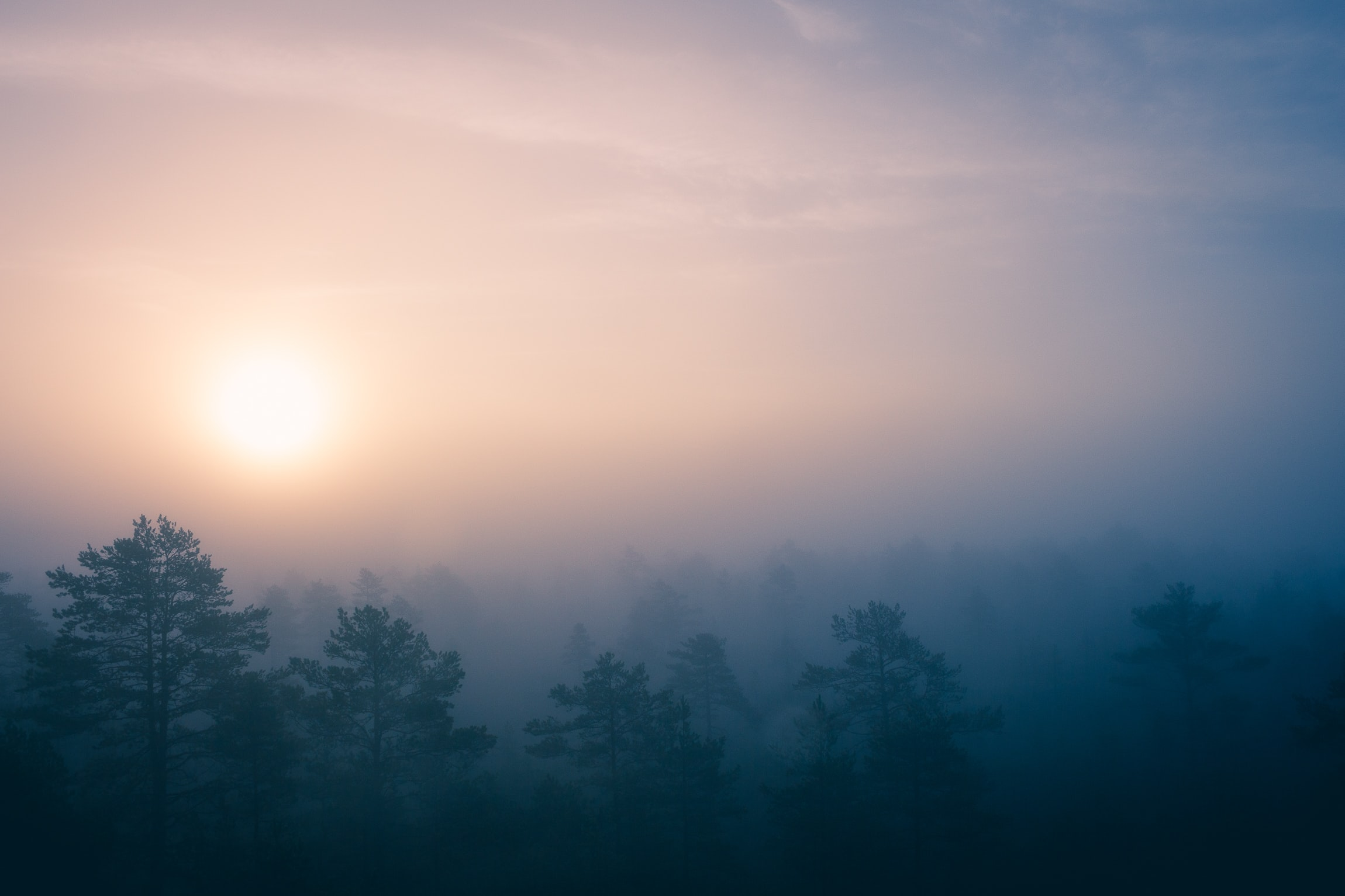 green trees covered with fogs during sunrise