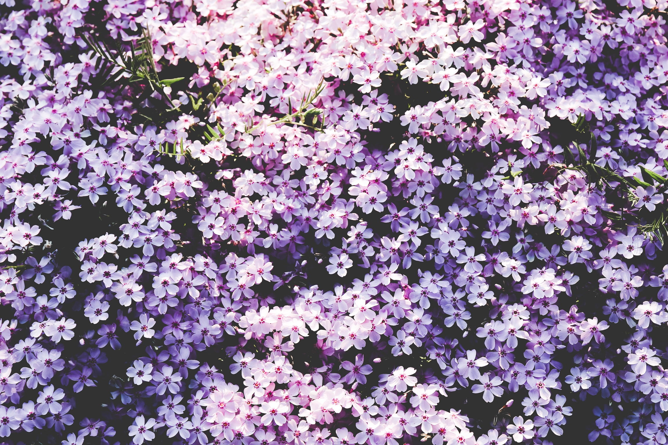 A picture full of purplish white flowers.