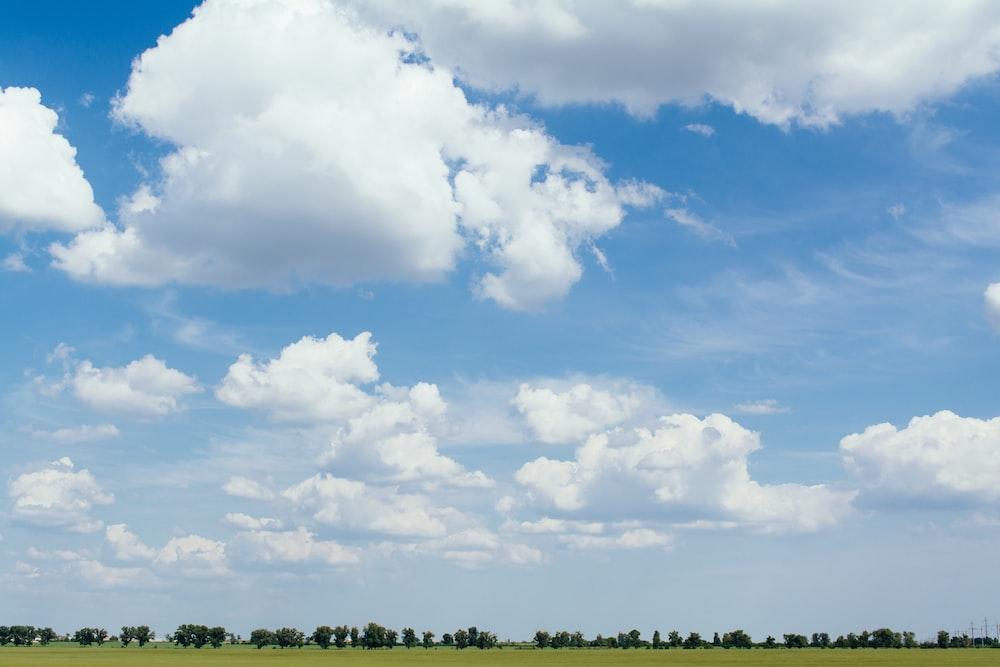 grass field at daytime