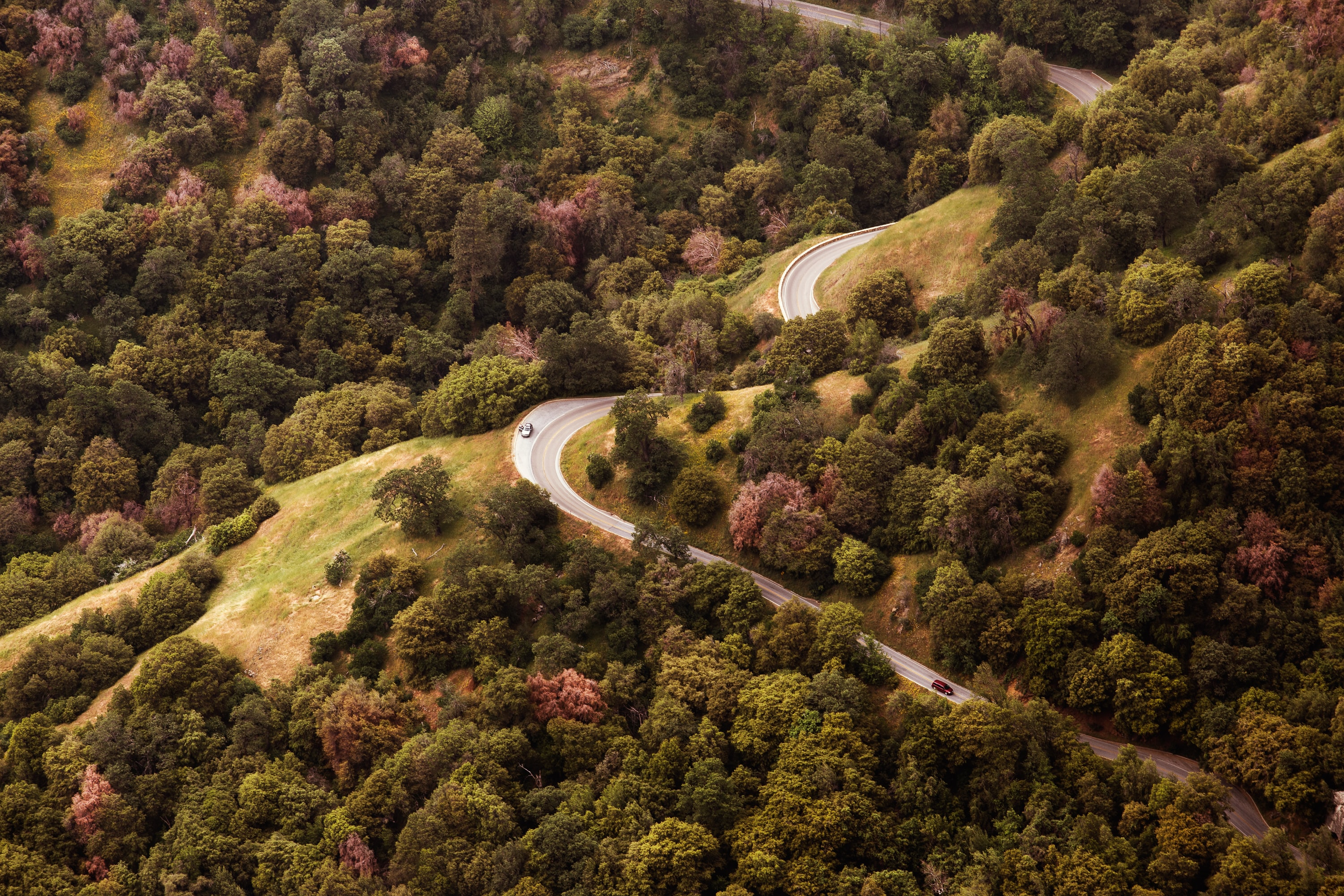 Car on winding forest highway on slope with trees in California