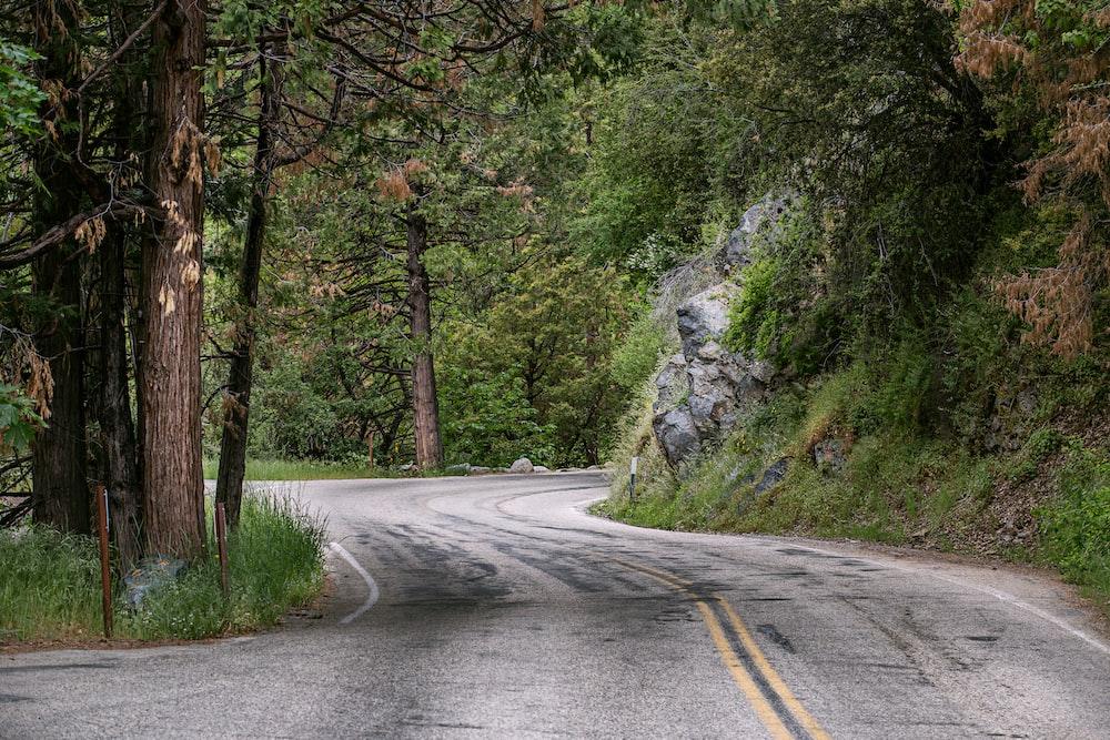 asphalt road in between tres