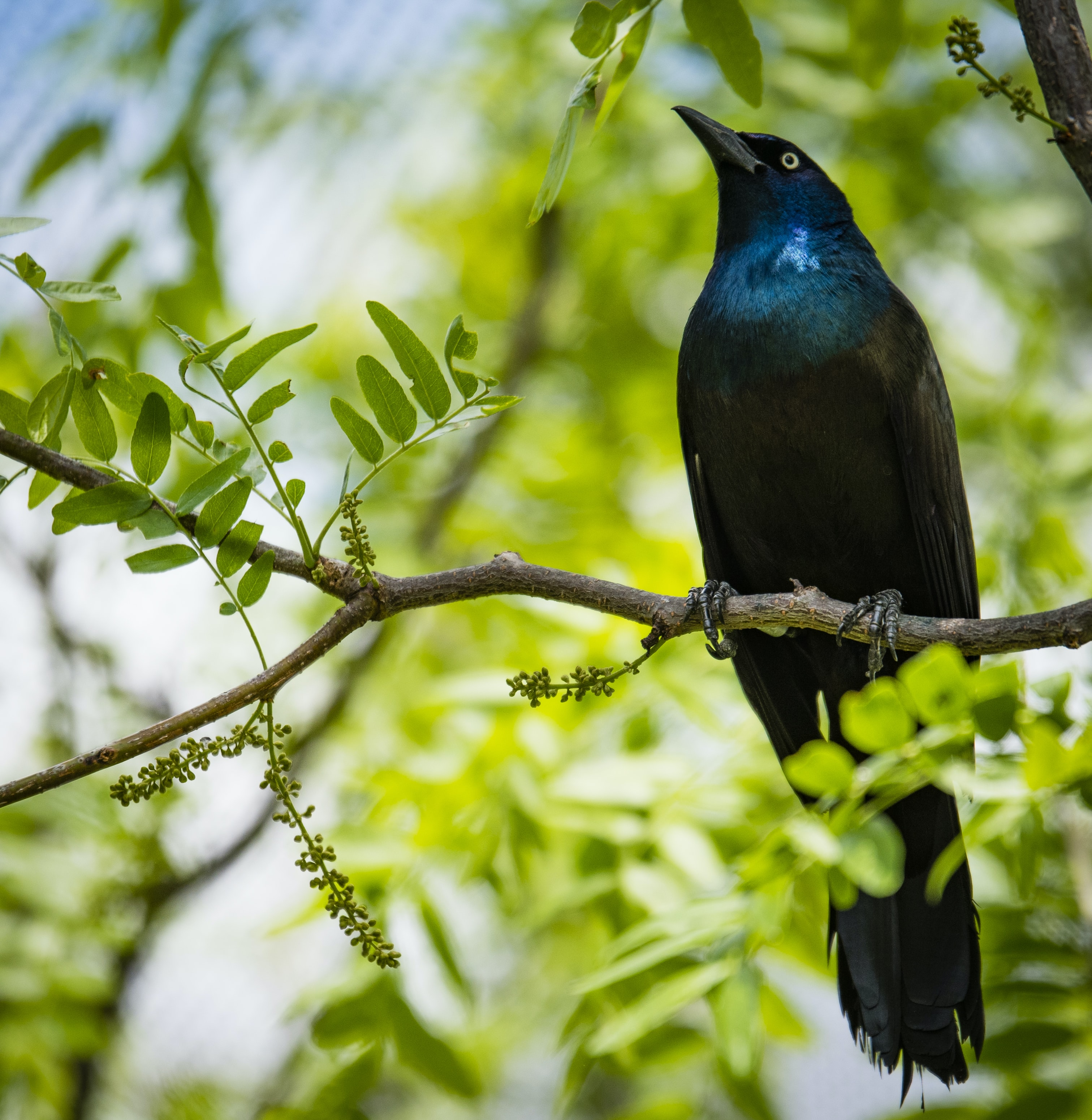 selective focus photography of black and blue bird on tree branch