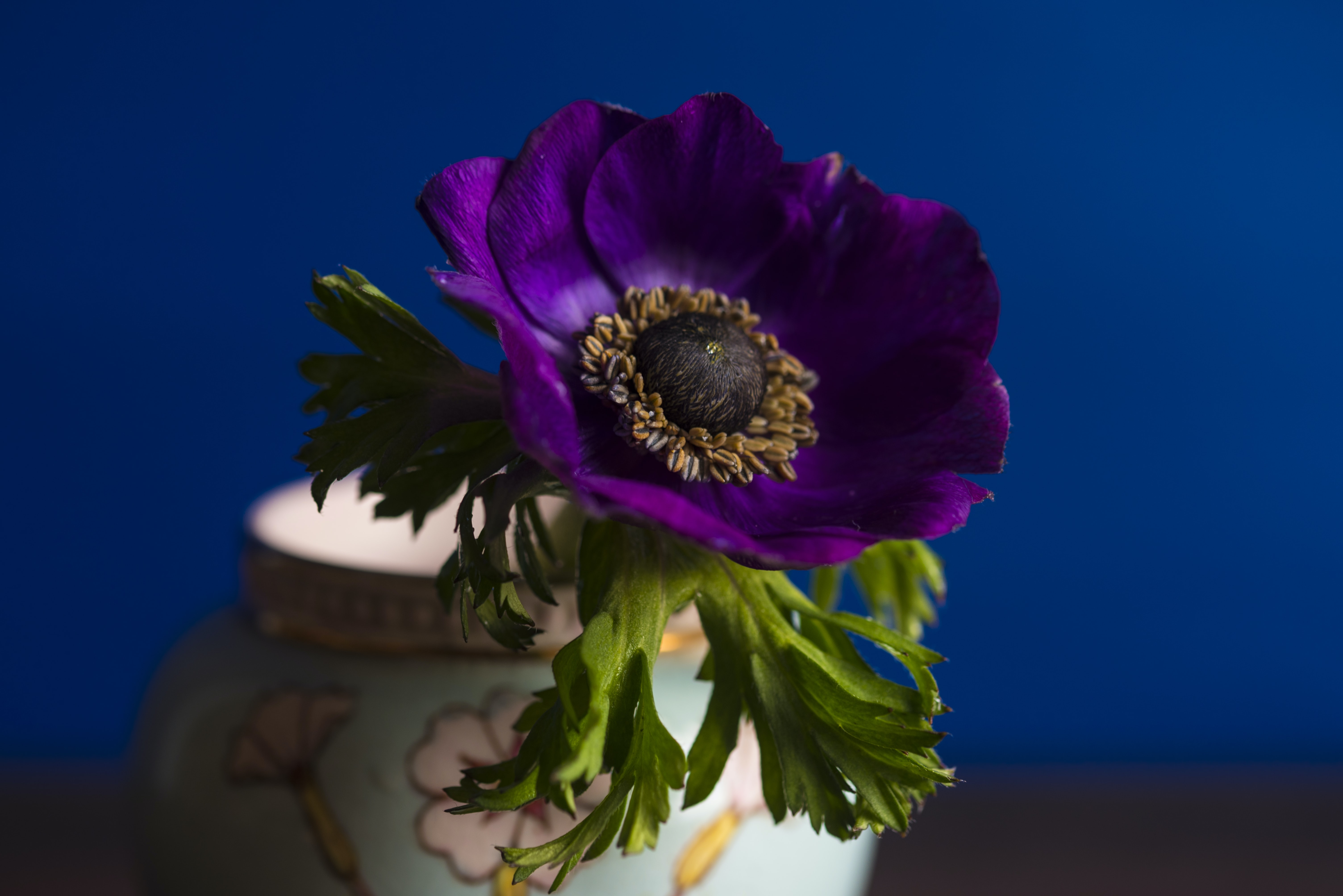 Close-up of a dark purple flower in a floral vase