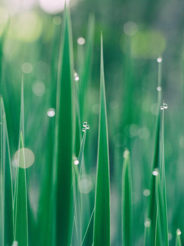 green grass selective focus photography
