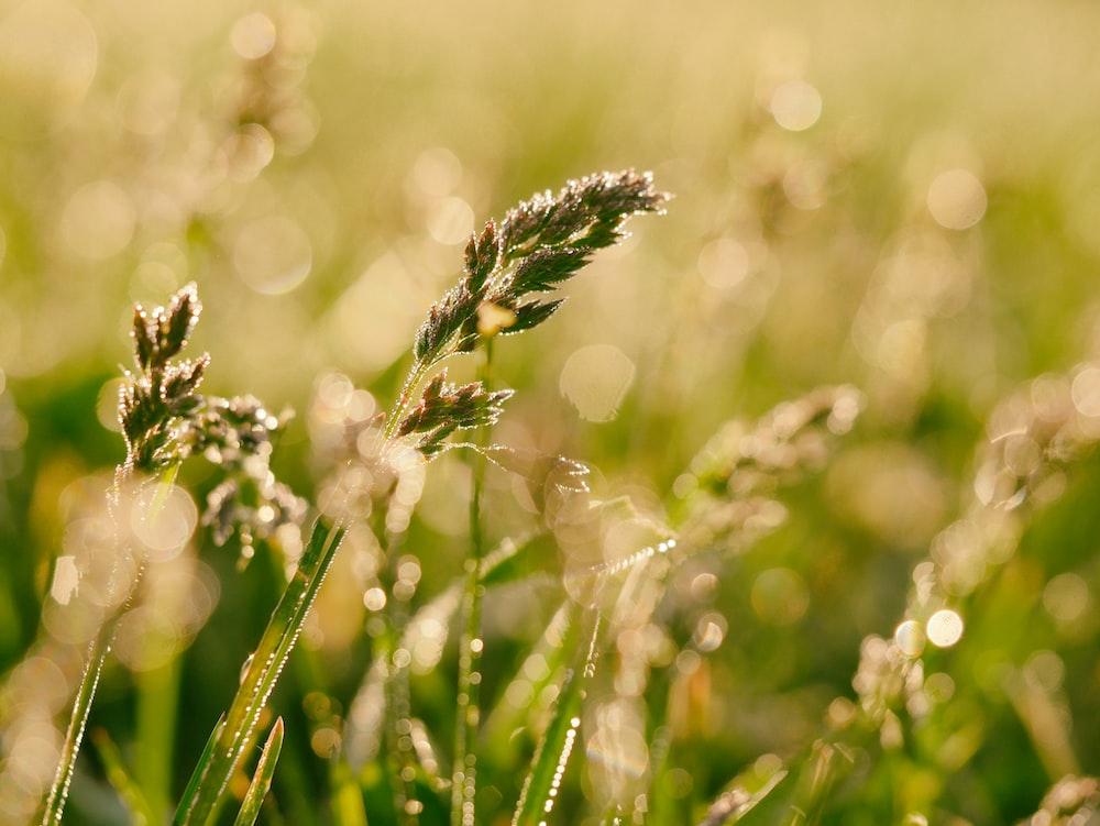 green grass close-up photography
