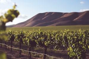 4690. Bor,szőlő, borászatok
