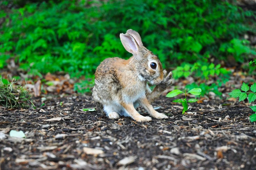brown rabbit near green leafed plant