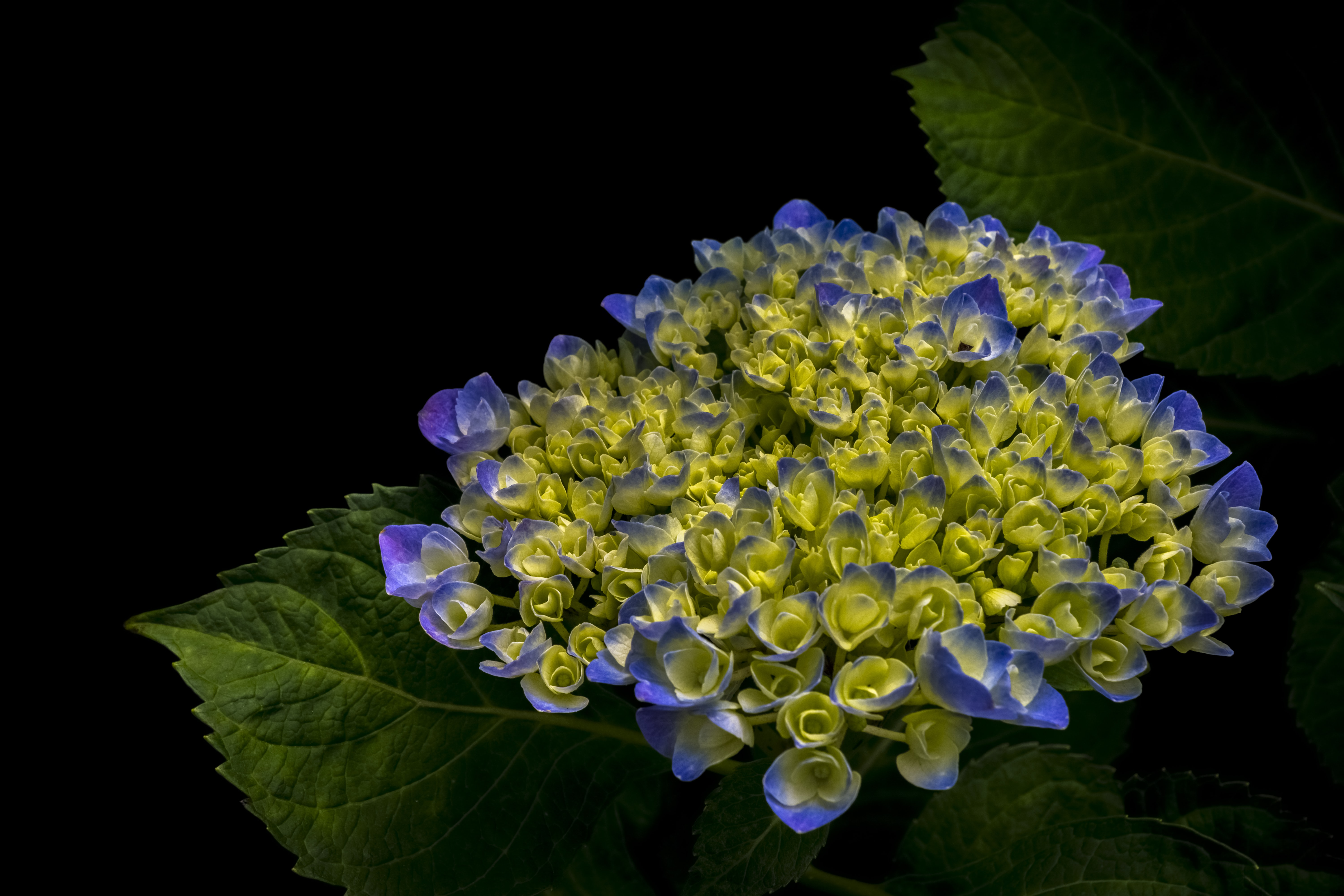 cluster of purple and green petaled flower