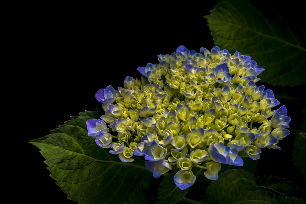 500 Blue Flower Pictures Hd Download Free Images On