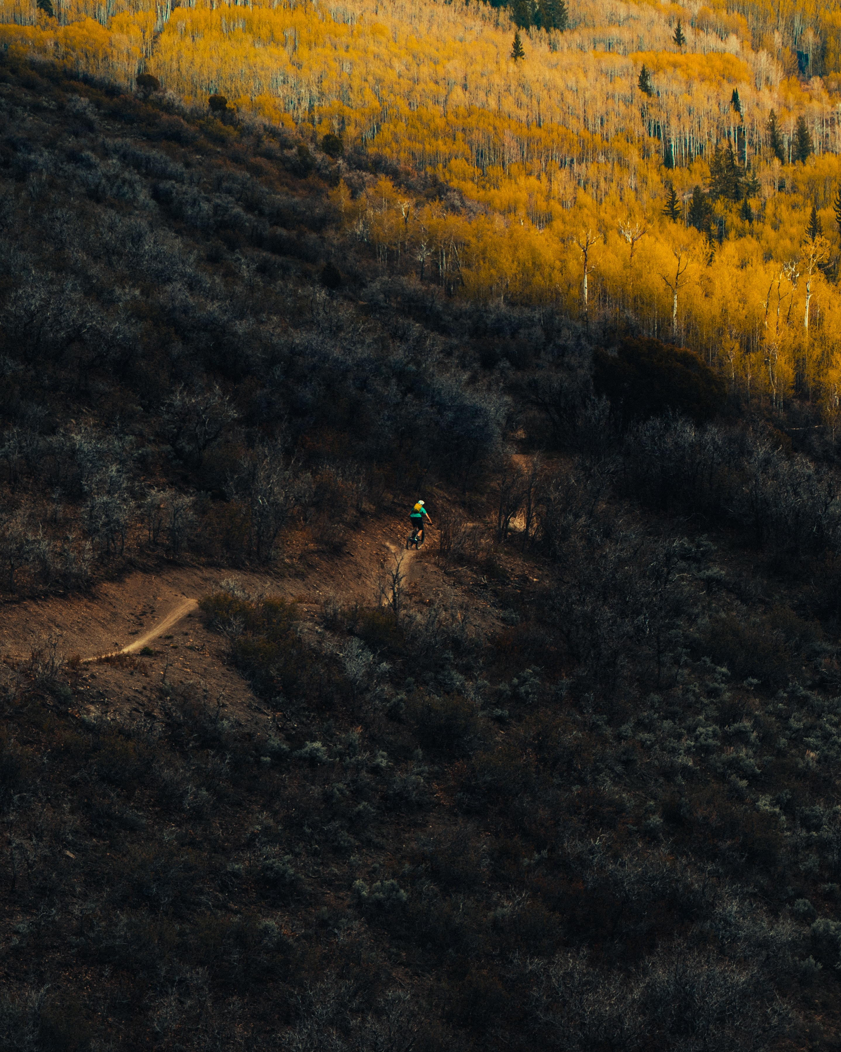 A person riding a bike on a dirt path on an overgrown slope