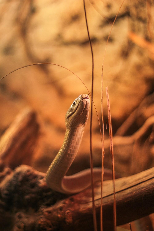 brown and black snake on brown rock