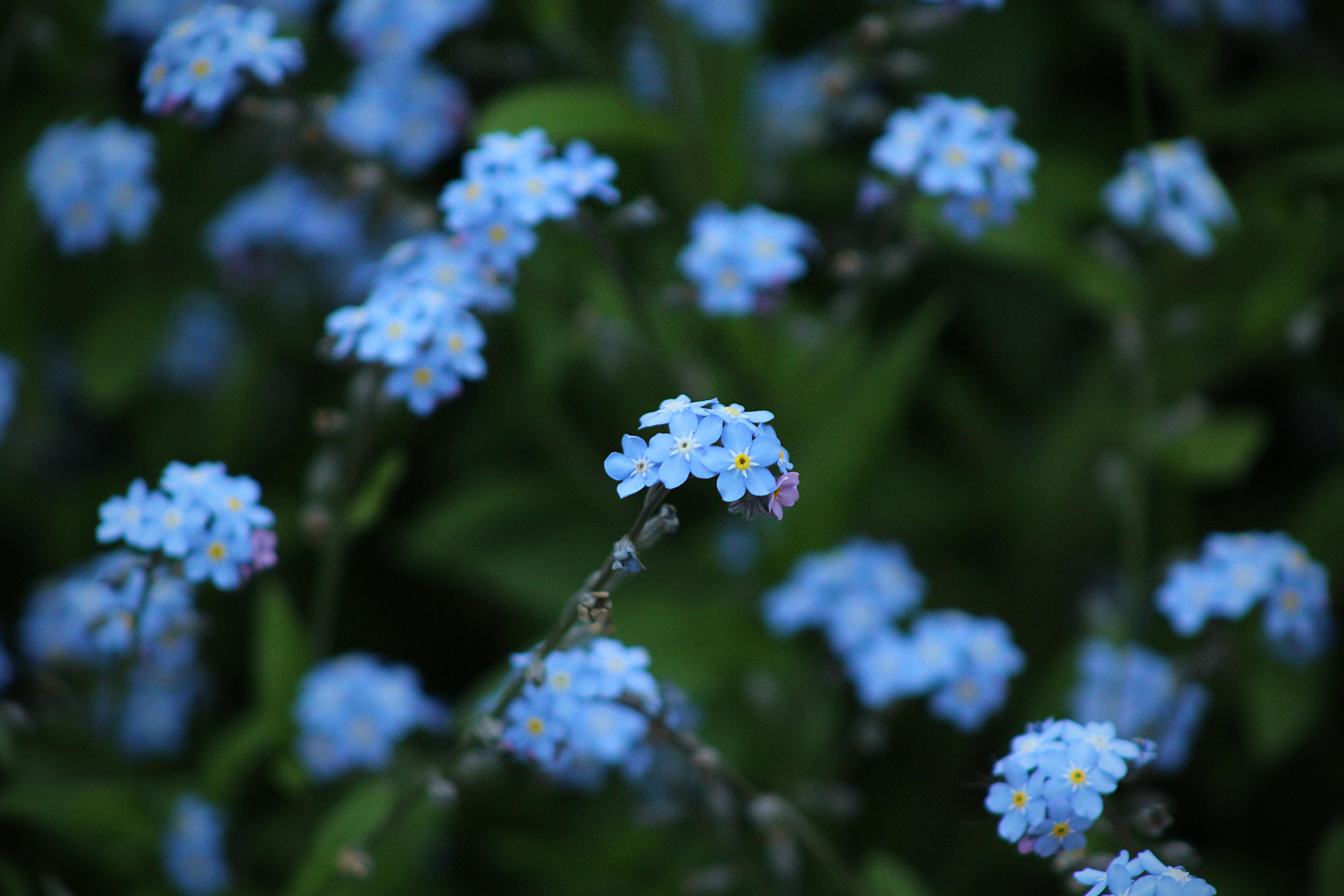 tilt shift photography of blue flowers