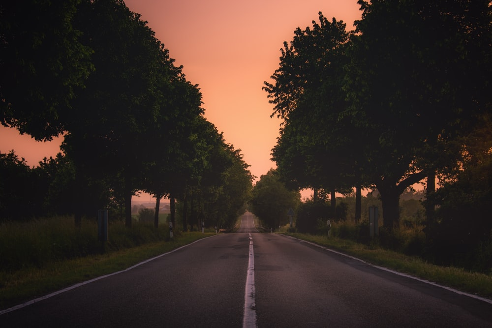 gray concrete roadway between green trees