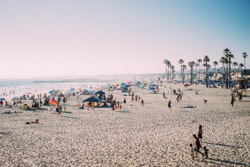 people on seashore during daytime