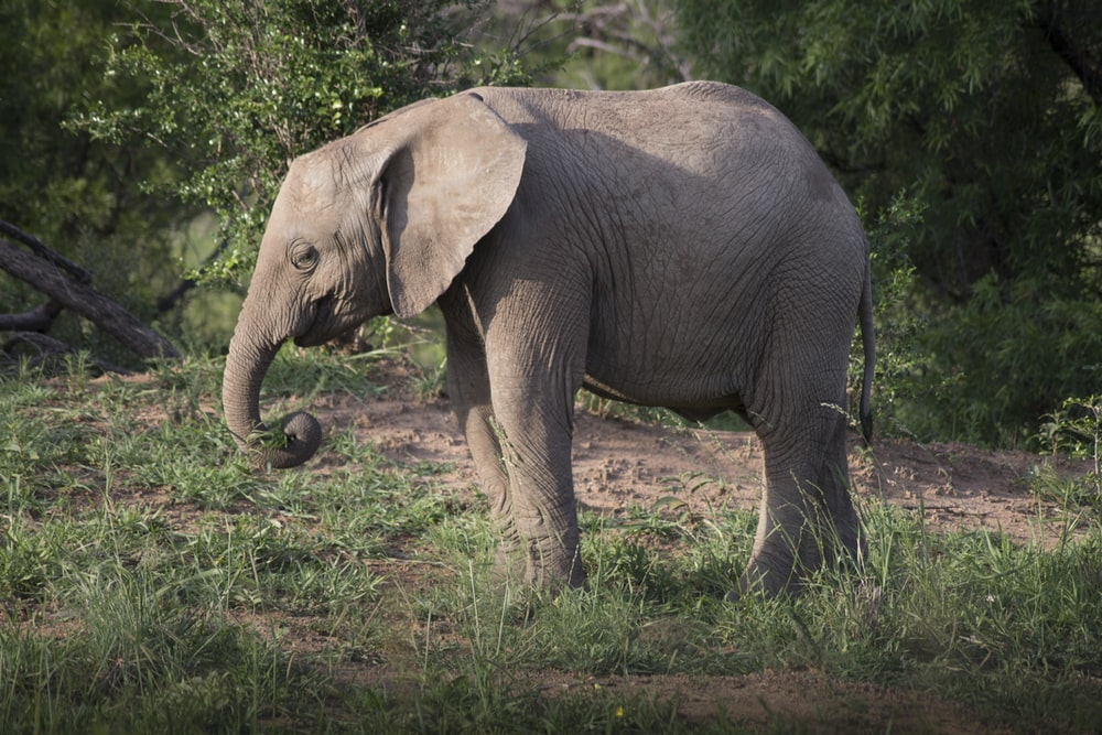 gray elephant near trees during daytime