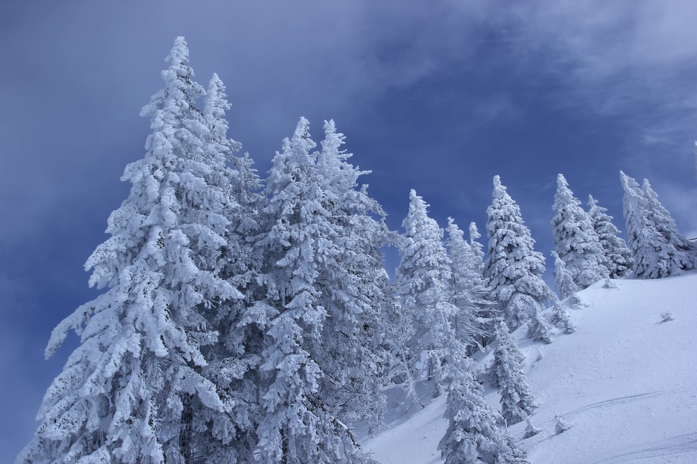 landscape photography of tree coated with snow