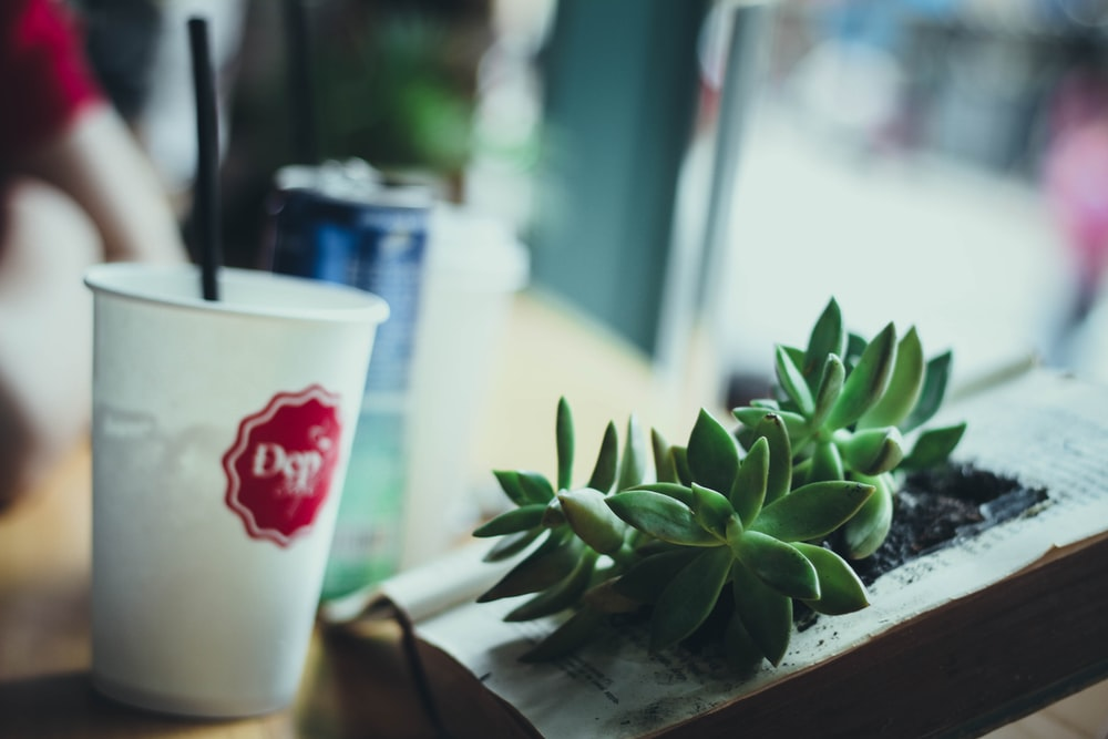 tilt shift photography of white cup near green indoor plant