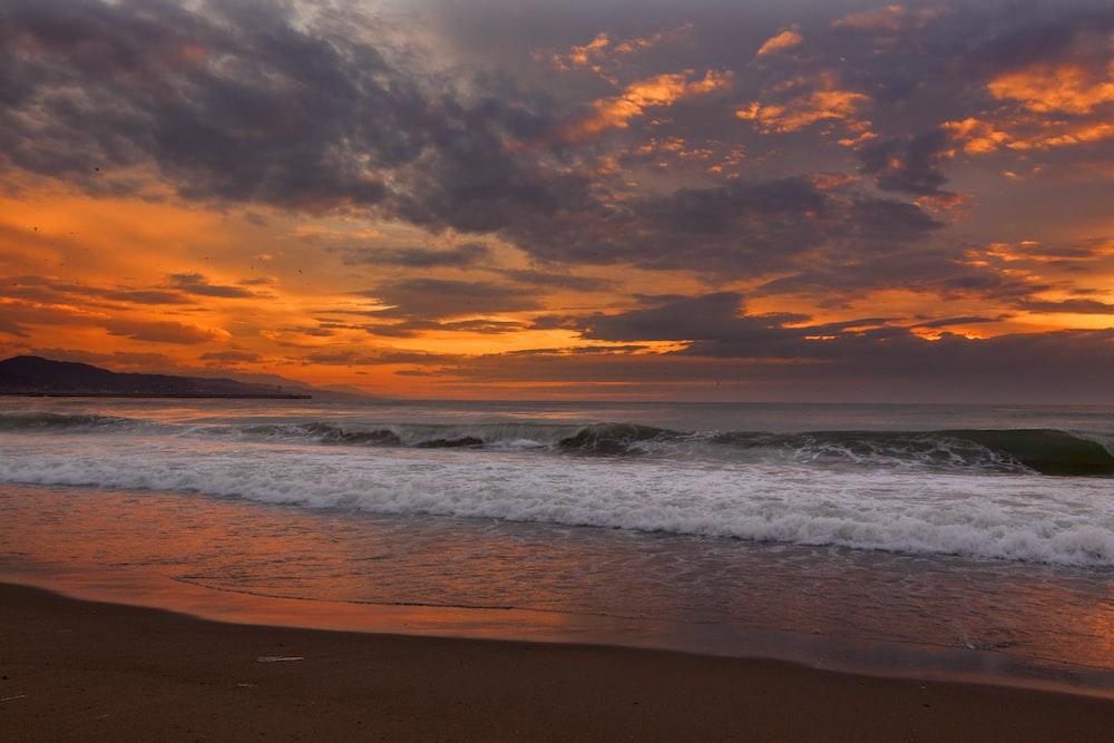 seashort under orange sky