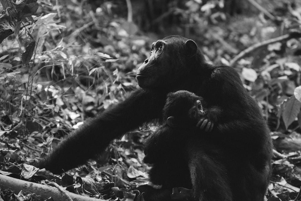 grayscale photo of two monkeys