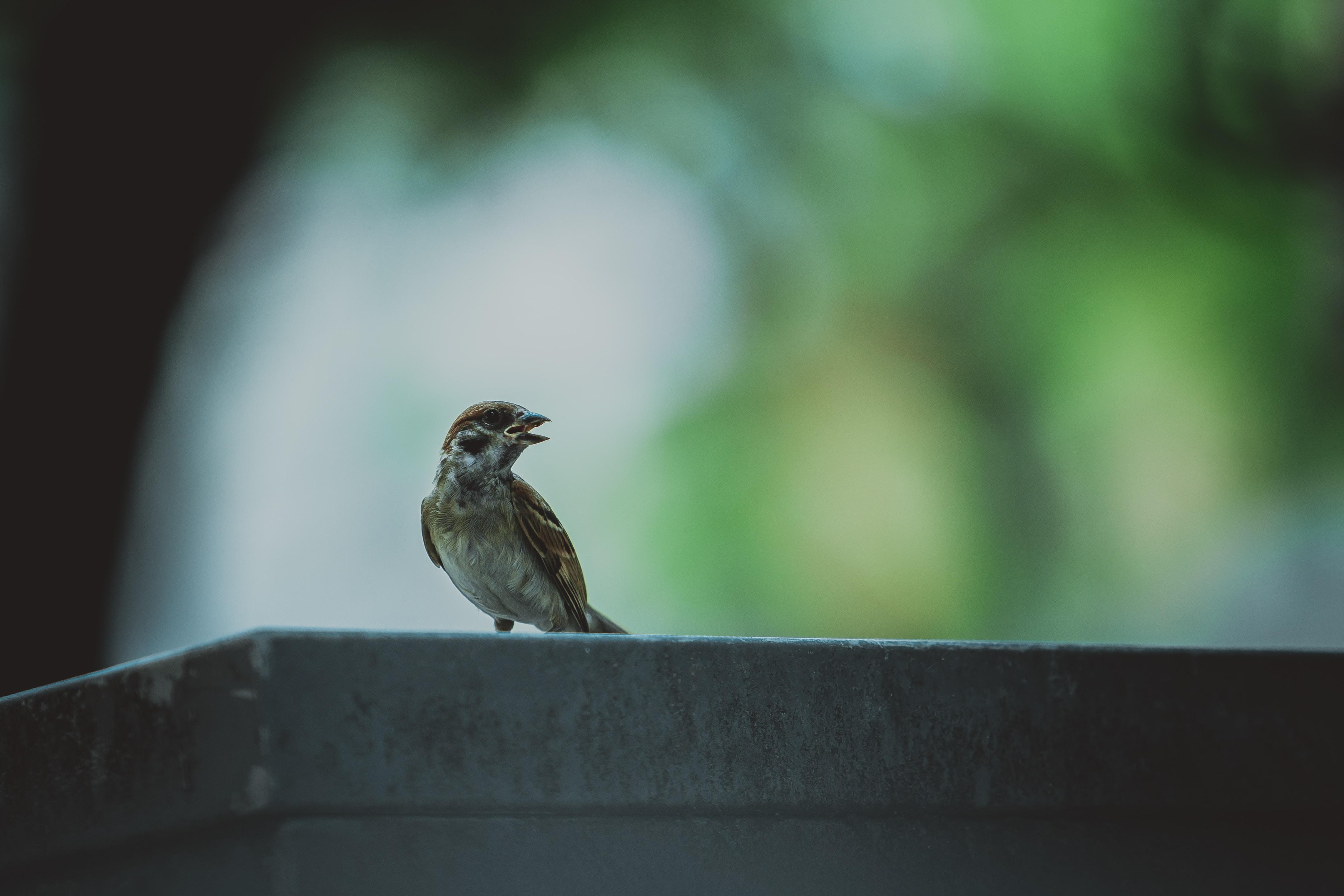 shallow focus photo of brown bird