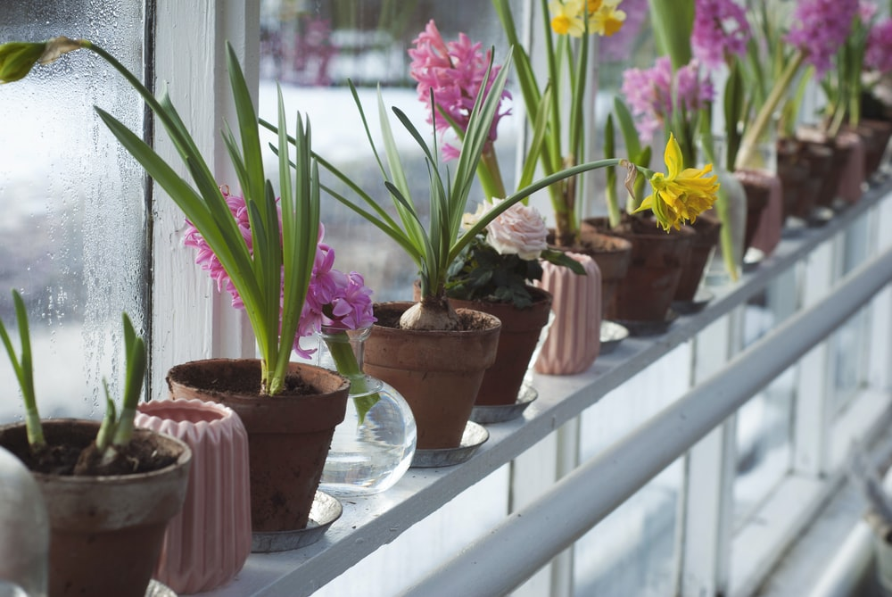 flower plants on windowsill