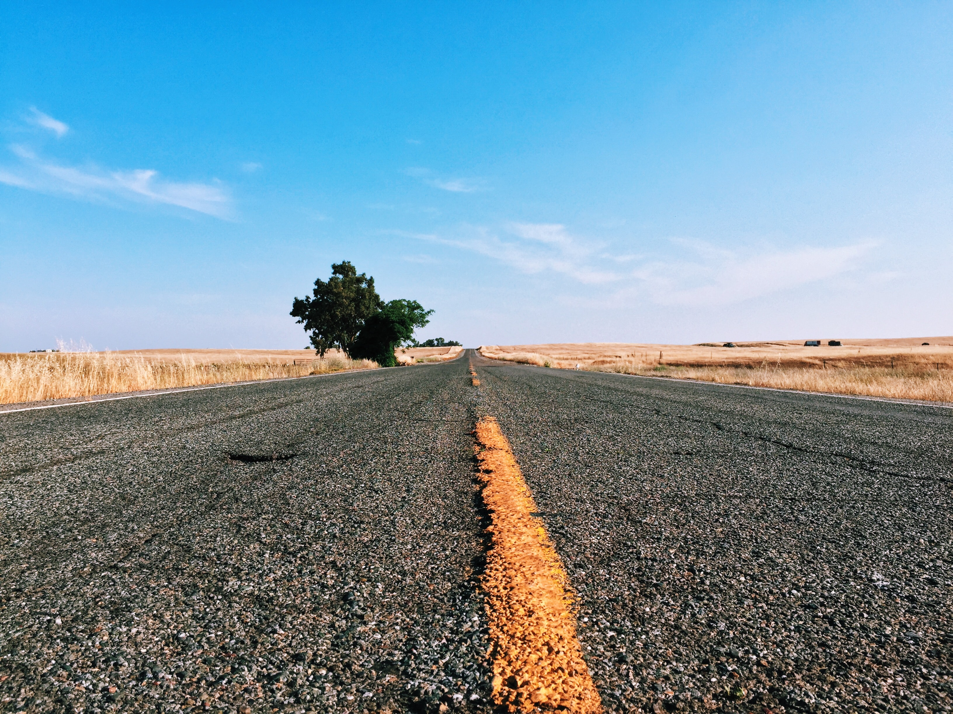 photography of road pavement with tree