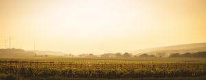 4607. Bor,szőlő, borászatok