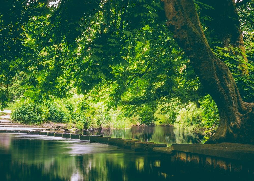 green leaf tree near body of water