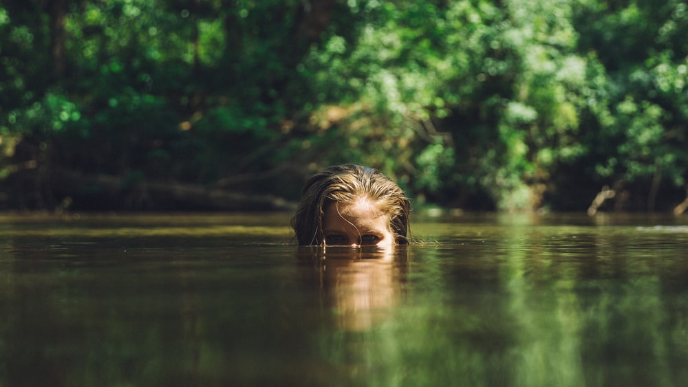 animal submerge in body of water