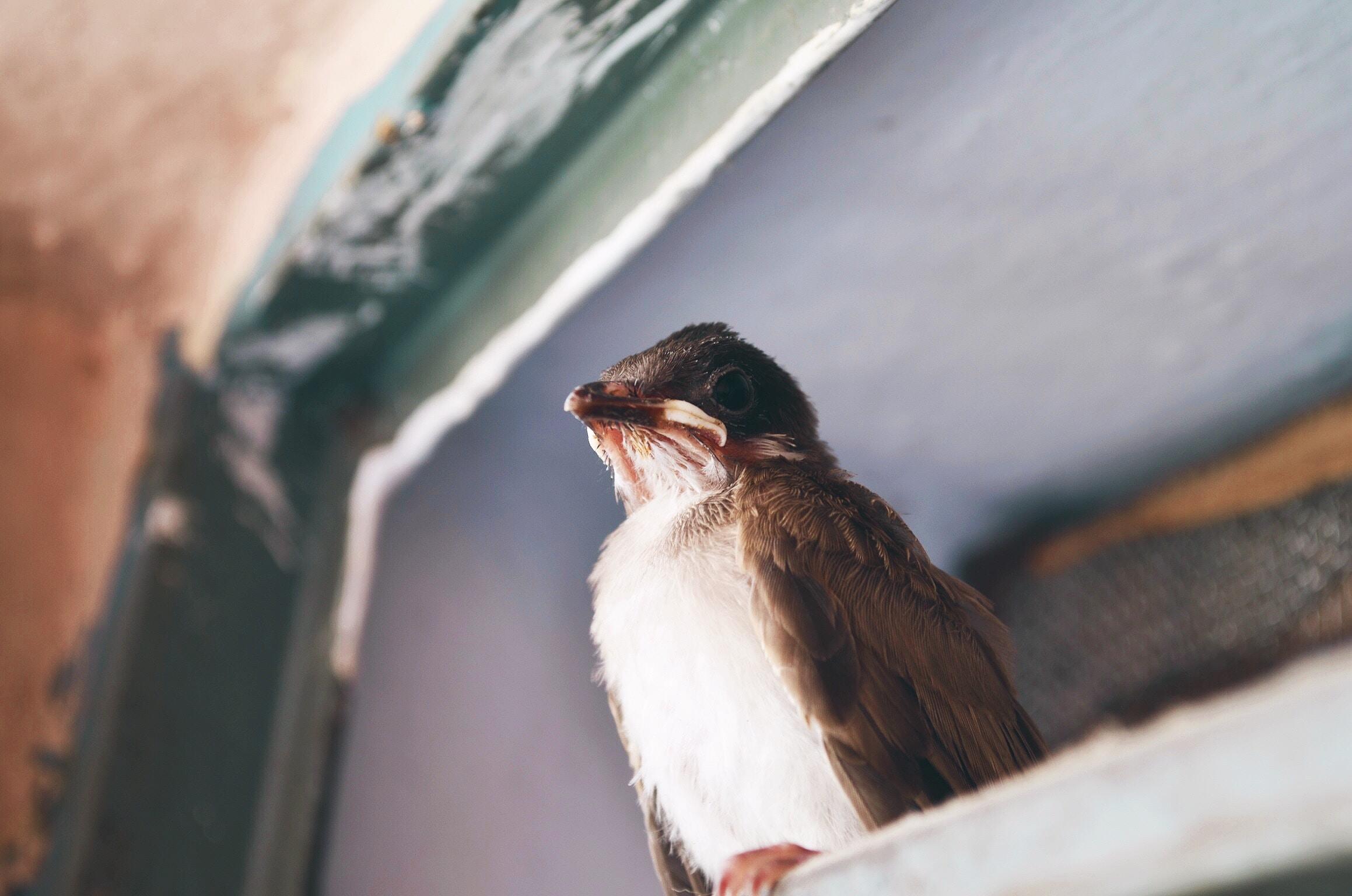 shallow focus photography of brown bird