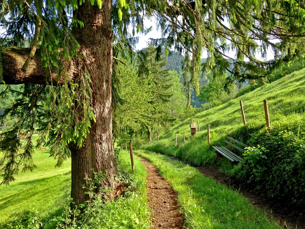 pathway in between grass field at daytime