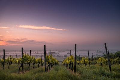 4631. Bor,szőlő, borászatok