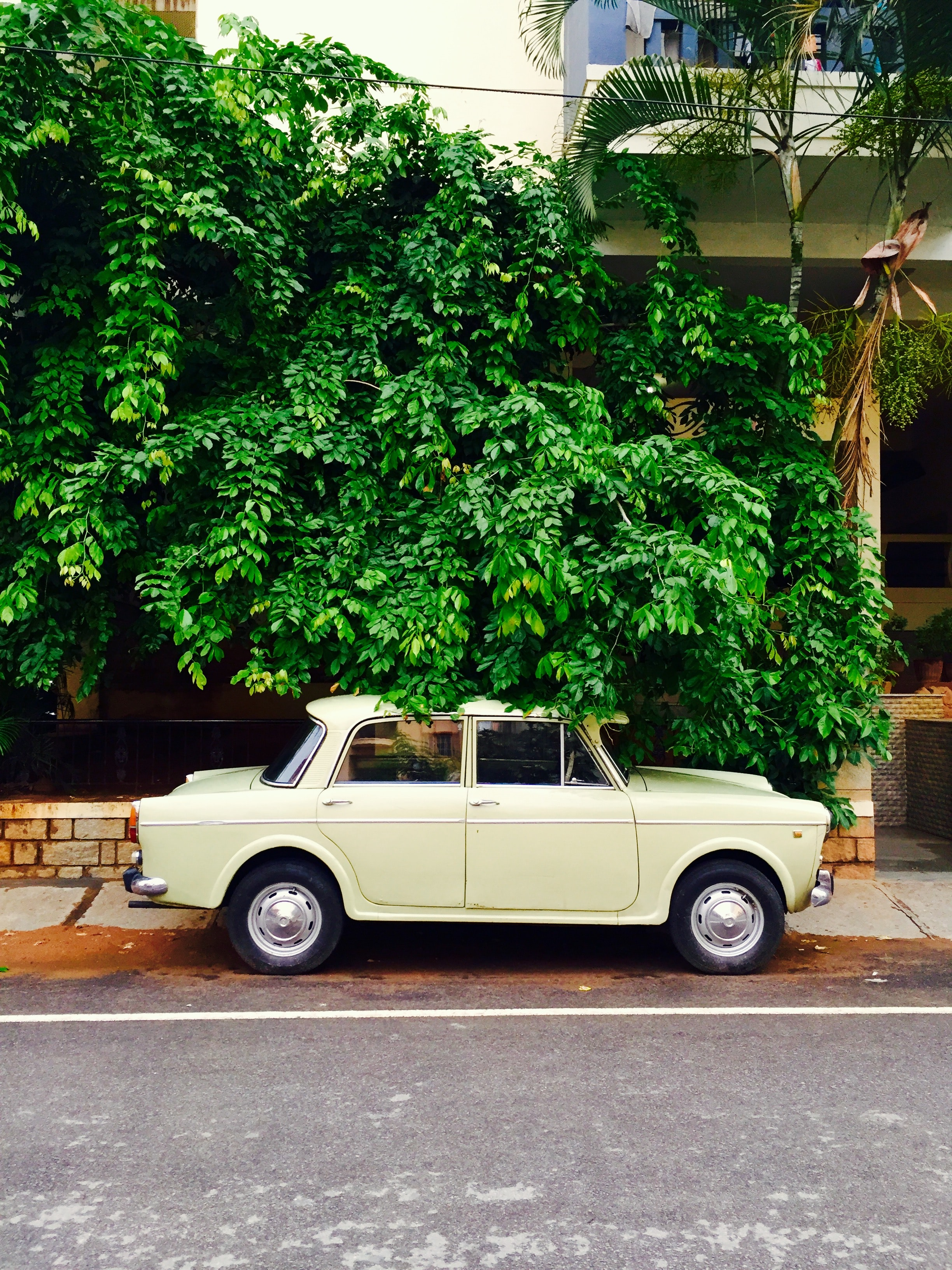 Retro cream colored car parked on pavement under overgrown tree in Bengaluru