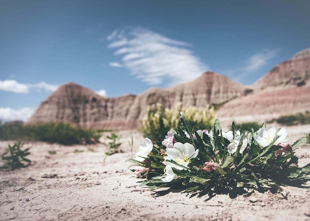 Desert Flower Pictures Download Free Images On Unsplash