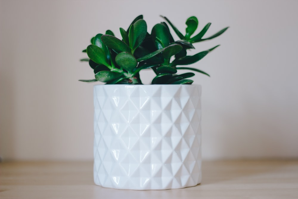 green succulent plant in pot