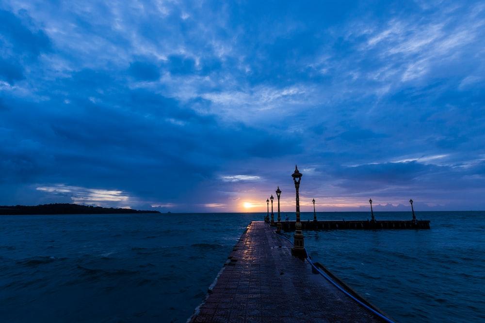 brown seadock during golden hour