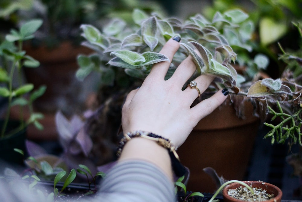 person holding green succulent plant