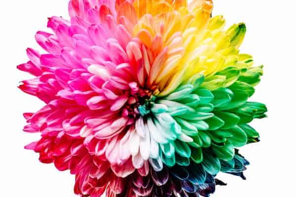 סליים (SLIME) כחומר נפשי: ערכו הפסיכותרפויטי בראי מושגיה של פסיכותרפית הצבע