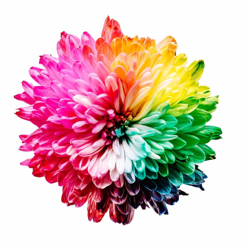 multicolored flower illustration